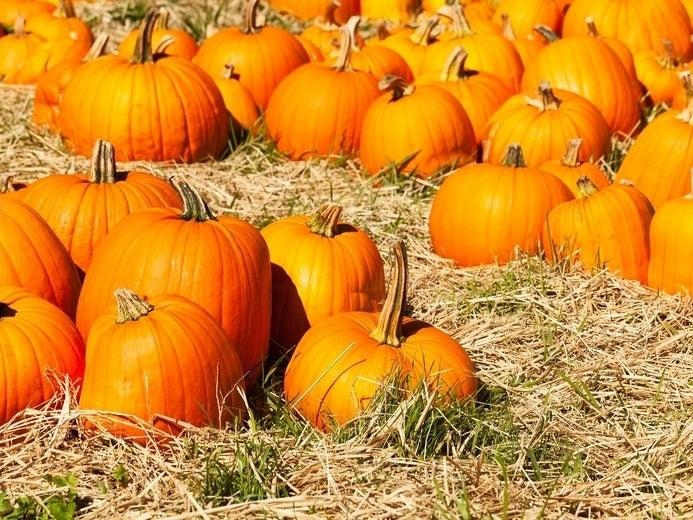 Find the nearest hayrides, pumpkin patches and other fall events in the north suburbs.