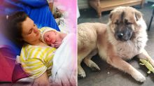 'Jealous' dog mauls 12-day-old baby to death