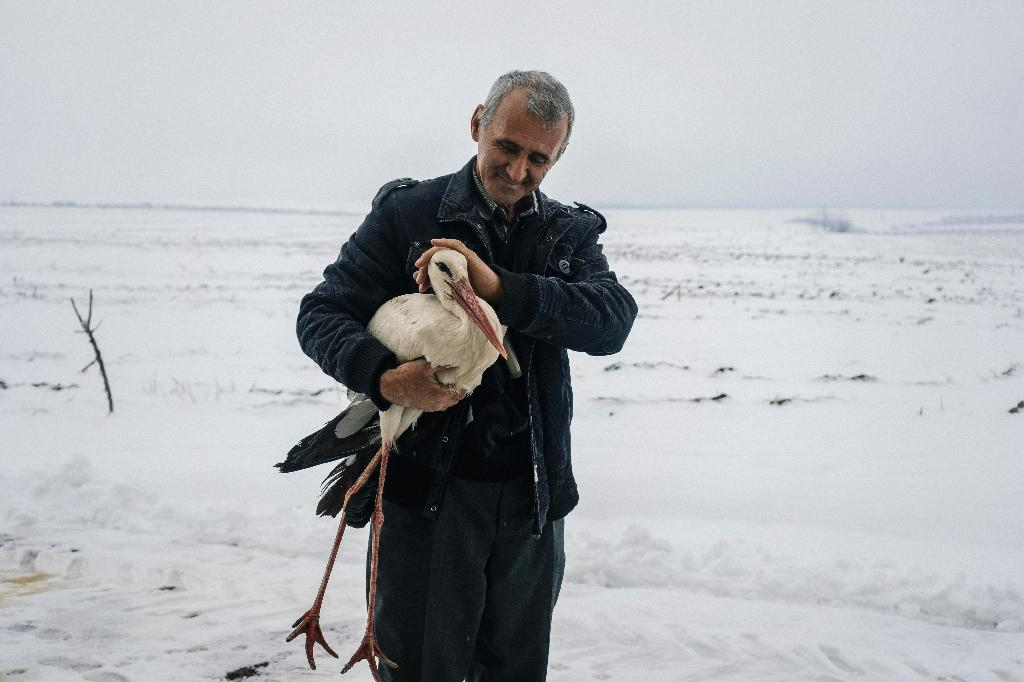 People in Bulgaria have been helping distressed storks during a cold snap (AFP Photo/Dimitar DILKOFF)