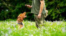 "COPY Dog brains ""process speech in the same way human brains do"""