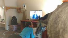 Unglaublich: Frau testet tierfreundliches Hotel mit ihrem Pferd