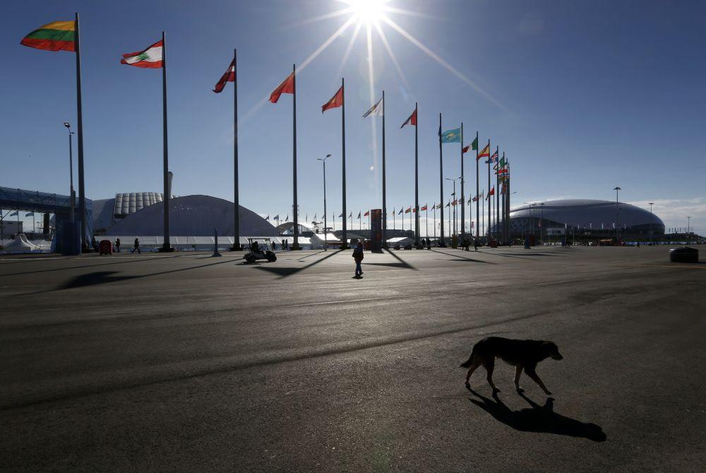 SOCHI SCENE: Stray dog danger
