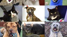 All These Gorgeous Animals Have Now Been Rehomed – Here's What To Know Before Adopting