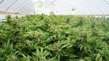 Better Marijuana Stock: Cronos Group vs. MariMed