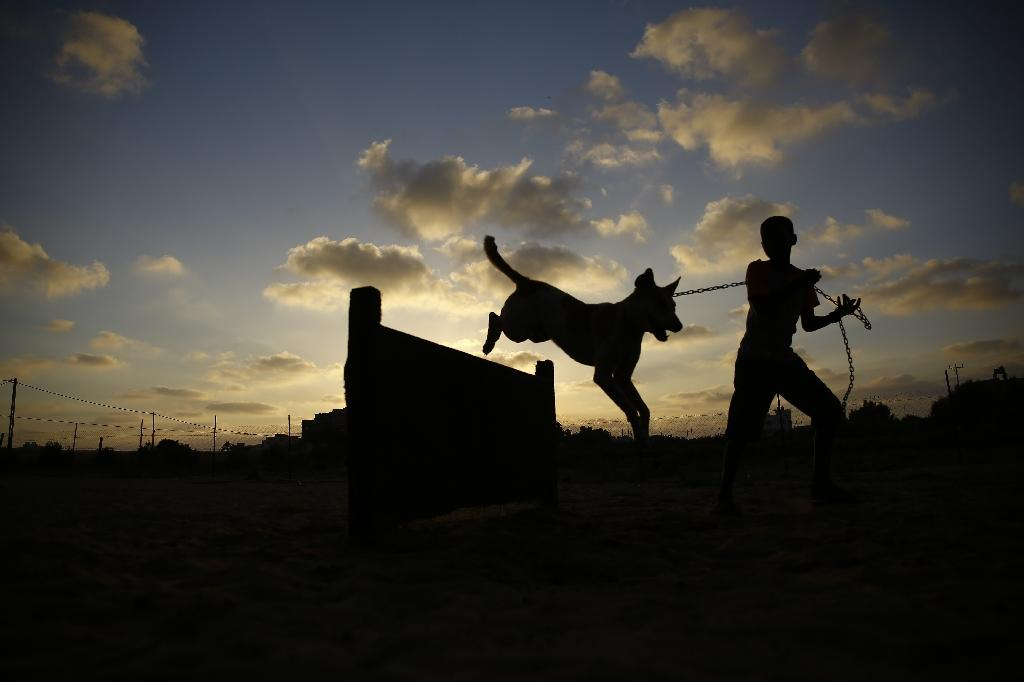 A Palestinian volunteer trains a stray dog at the Al-Soulala Association for Protection, Rehabilitation and Training, dog shelter in central Gaza Strip (AFP Photo/Mohammed Abed)