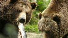 Coronavirus has damaged the stock market and the bears are hungry