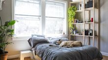 FYI, These Are the Most Pet-Friendly Plants for Your Home