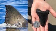 Girl finds prehistoric giant shark's tooth on beach