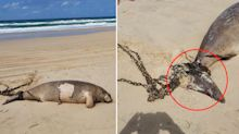 Horror find on Queensland beach leads to call for government rethink