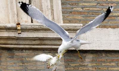 Pope's Doves Attacked During Vatican Prayers