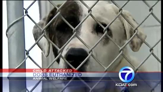 Dogs euthanized after girl attack