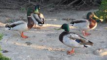 Ormond Beach, enclave silvestre en EEUU que no se doblega a la contaminación