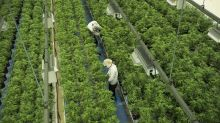 GMP upgrades Canopy Growth to $70, citing plan for U.S. hemp factory