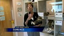 Cat explosion puts shelter over capacity