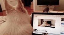 Goofy Dog Goes Through 'Howlception'