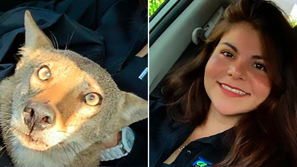 Woman discovers dangerous truth about rescue dog
