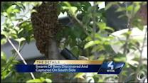 Swarm of bees spotted on South Side