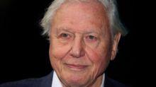 David Attenborough calls Australia's bushfires 'the moment of crisis' to address climate change