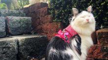 Esta gatita tiene un admirador secreto
