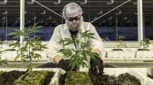 Aurora Cannabis makes a 'blessed' buy of organic marijuana producer