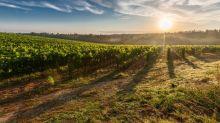 Global warming is putting wine under threat