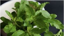 Grow These Kitchen Herbs as Indoor Plants to Enhance the Taste of Your Food