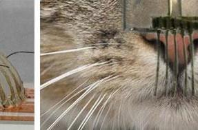 Scientists replicate kitty whiskers to help robots 'feel'