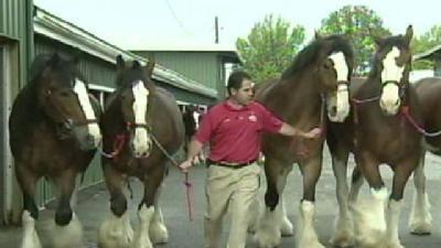 Final Touches For Preakness