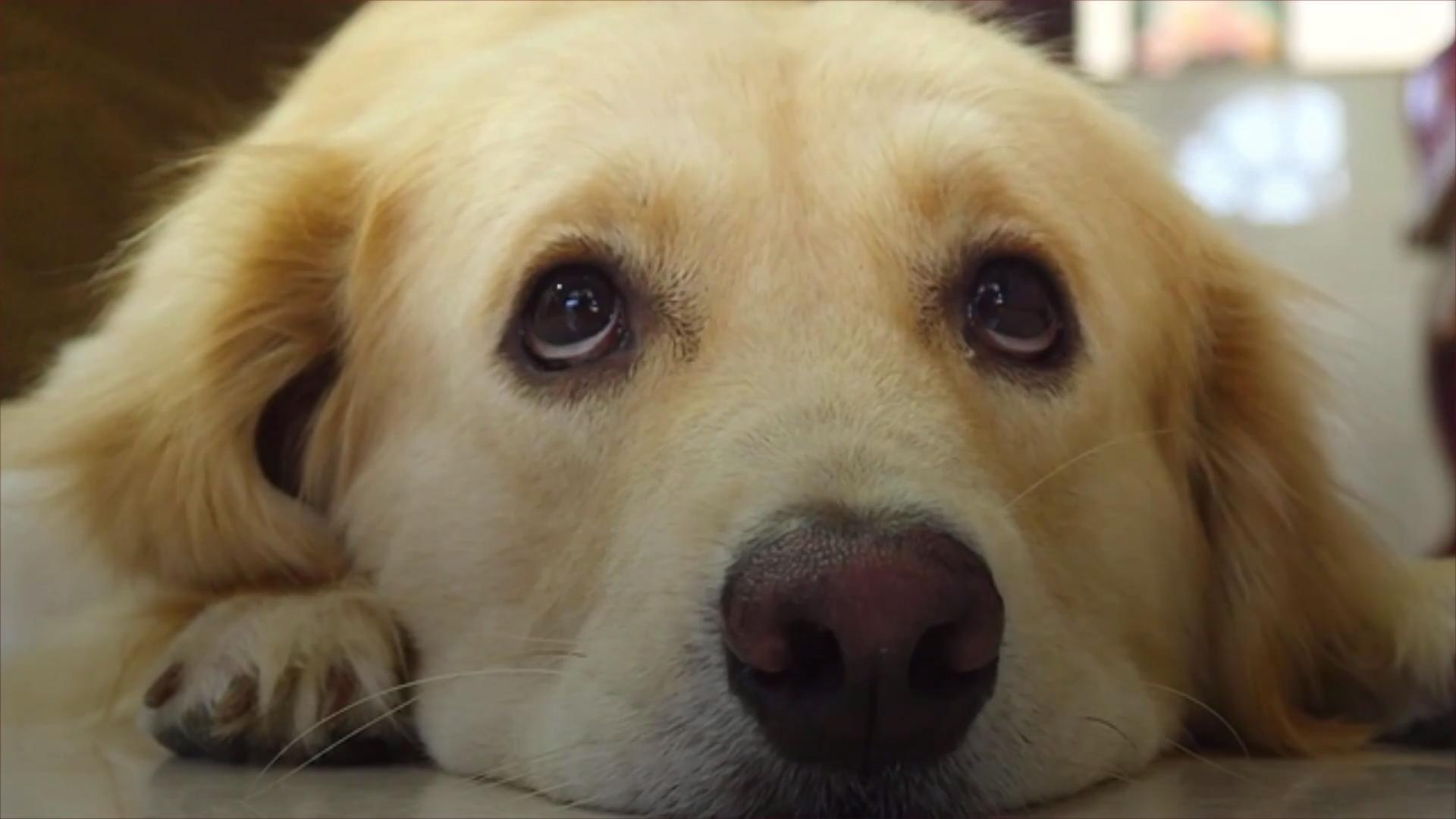 WATCH: Dogs Evolved to Have Eyebrow Muscles—and More Effectively Pull on Our Heartstrings