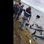 14 dolphins die in Mauritius near Japanese ship's oil spill