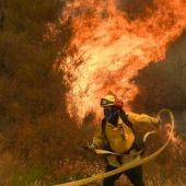 California wildfire displaces exotic animals, horses, cats and dogs, too