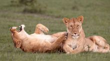 We Found the Funniest Animal Photos on the Internet to Make You Laugh