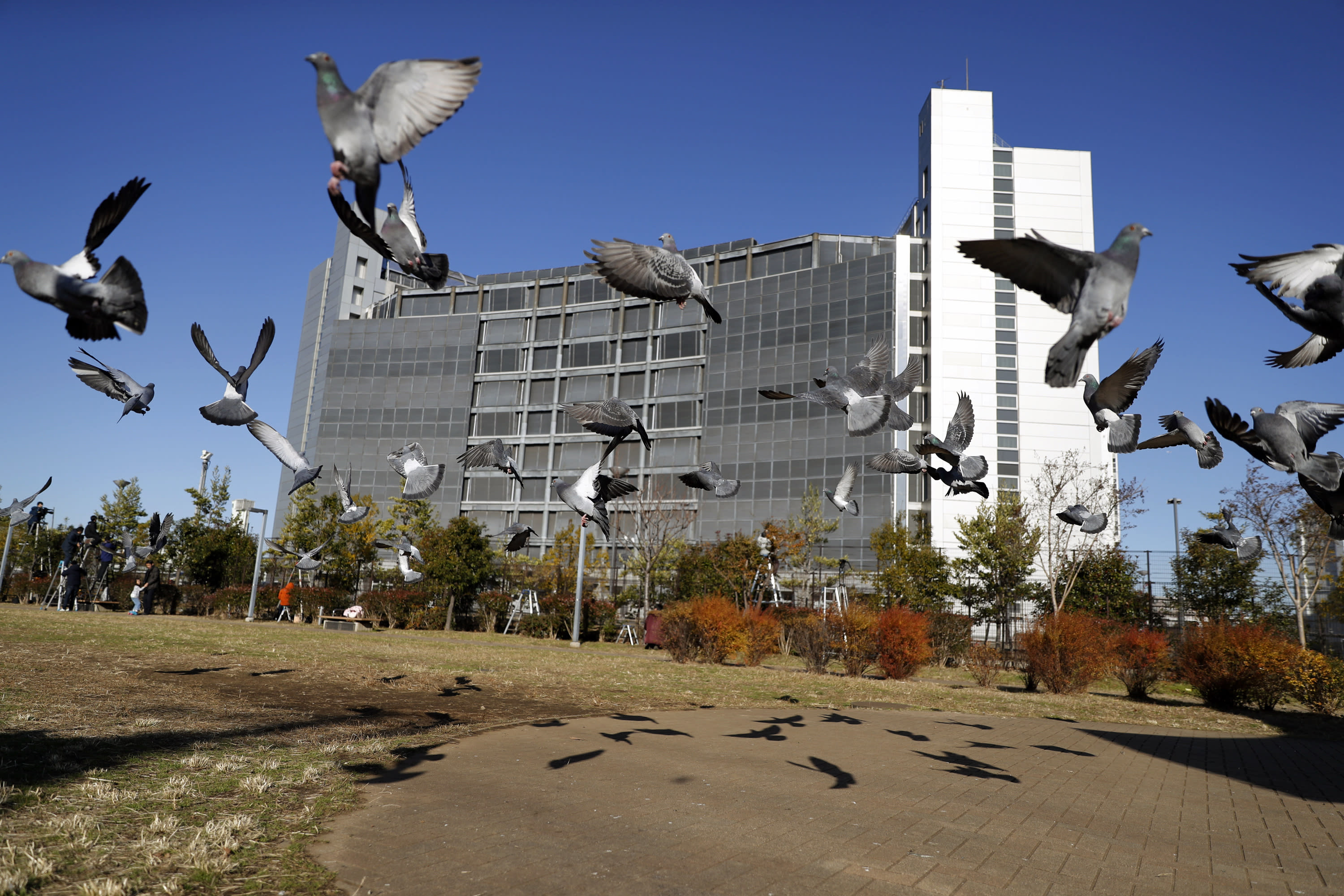 FILE - In this Dec. 25, 2018, file photo, pigeons fly near Tokyo Detention Center, where former Nissan chairman Carlos Ghosn is detained, in Tokyo. Ghosn on Monday, Jan. 21, 2019 asked for his release on bail from a two-month detention in Japan, promising he will report to prosecutors daily and wear an electronic monitoring ankle bracelet. (AP Photo/Eugene Hoshiko, File)