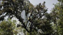 Pemprov DKI Targetkan Tanam 2 Juta Pohon hingga 2022