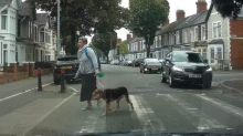 When you gotta go, you gotta go! Cheeky dog holds up traffic on Welsh road