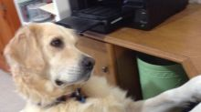 Dog Has Emotional Reaction To Video Of Crying Puppy