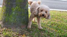 No solo las heces, también limpia la orina de tu perro en la calle