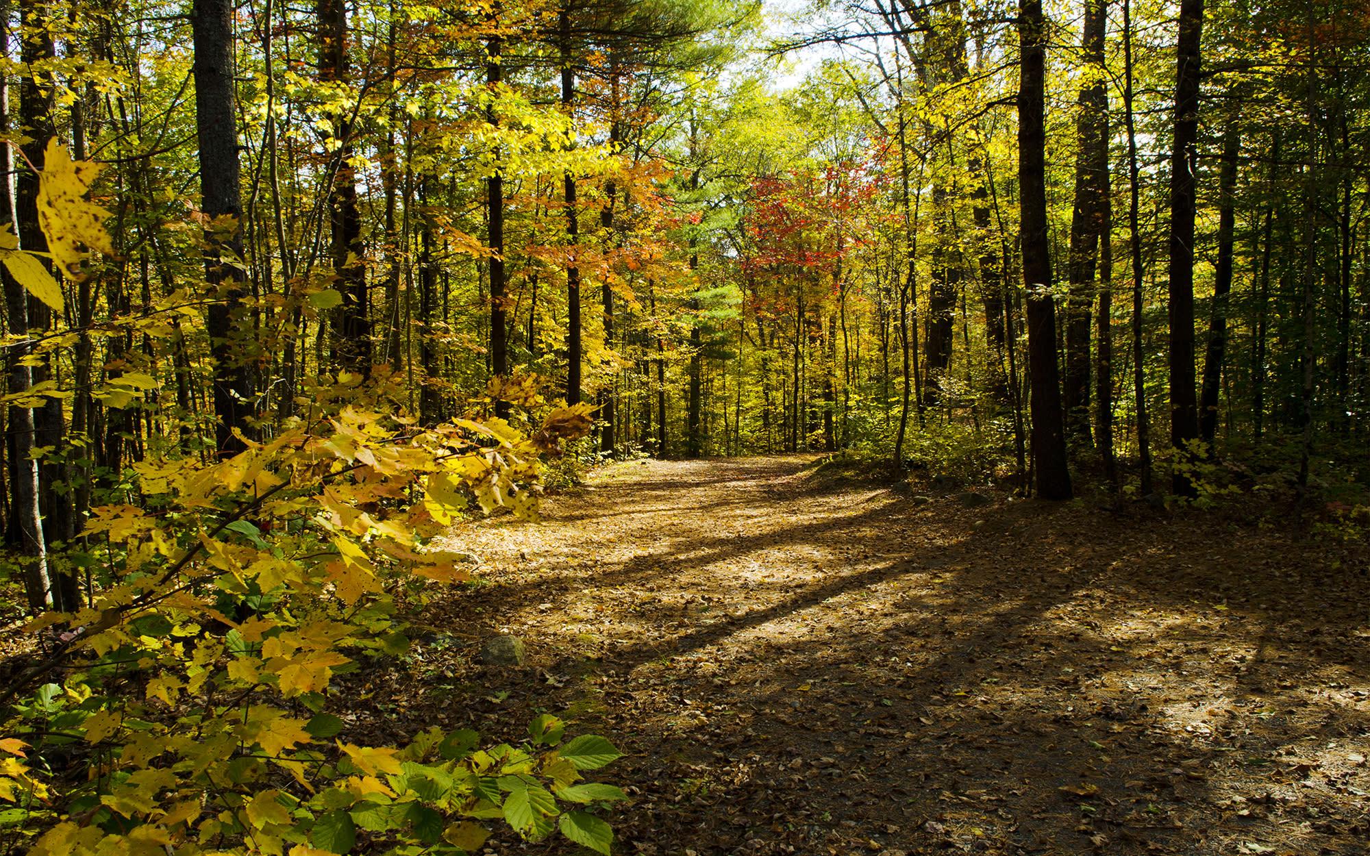 12 Beautiful Maine Fall Foliage Locations