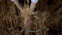 Shavuot 2015: Celebrating The Giving Of The Torah