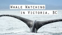 Whale watching with First Nation guides in Victoria, BC, Canada