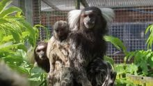 Hundreds of animals in Welsh zoo may have to be killed due to lack of funds amid coronavirus pandemic, owners say