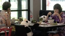 Restaurant uses stuffed pandas to enforce social distancing