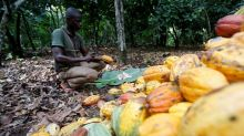 West Africa's cocoa farmers are trapped by the global chocolate industry