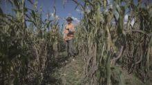 Bolsonaro veta auxílio emergencial a agricultor familiar