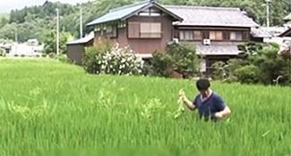 全球首位忍者碩士 45歲隱居種菜