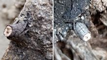 Mystery creature captured in incredible photos – can you spot it?