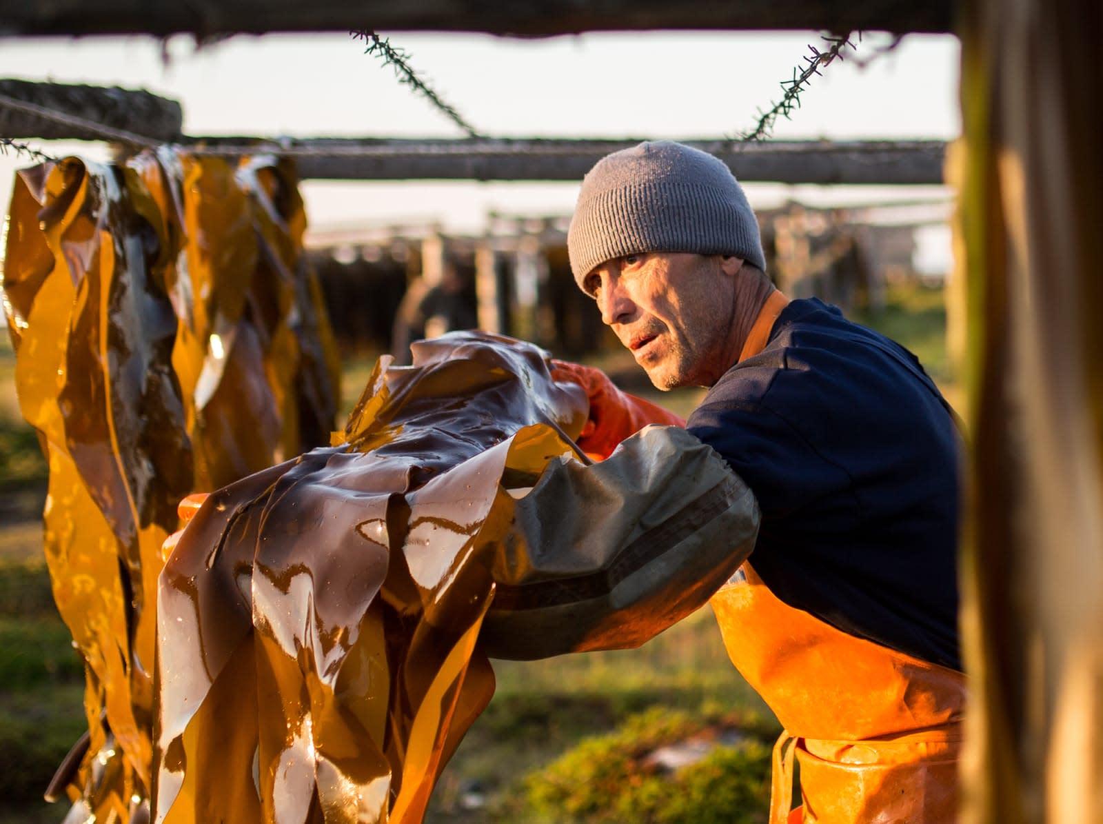 Harvesting kelp in Arkhangelsk Region, Russia