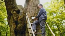 This tree with its own postal address is responsible for 100 marriages