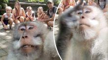 Cheeky monkey's hilarious photobomb ruins family photo