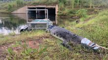 Rangers fear imminent attack as swimmers ignore crocodile warnings